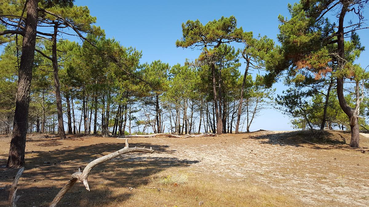 surdivac-plages-9
